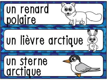 Animaux polaires - mur de mots et lexique (29 mots) - French animals