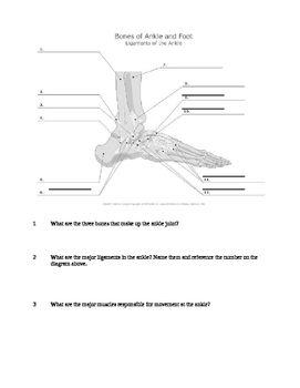 Ankle tutorial video handout