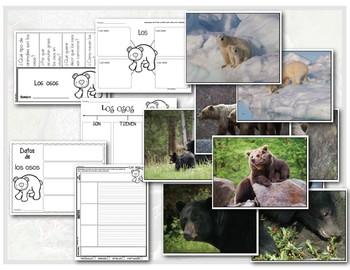 Análisis de texto informativo - Los osos