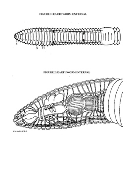Annelid Coloring Packet: Includes Polychaetes, Oligochaetes, and Hirudinea
