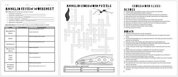 Annelids (Segmented Worms) Review Worksheet for Zoology or Biology
