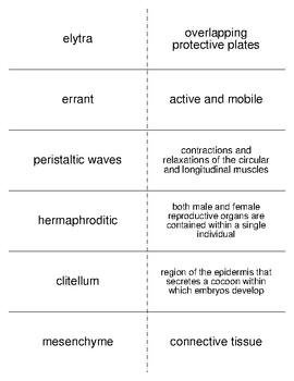 Annelids Vocabulary Flash Cards for Invertebrate Biology