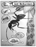 Ant Behaviors