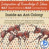 Ant Colony Informational Text Diagrams Illustrations Task Card RI.3.7 RI.3.8
