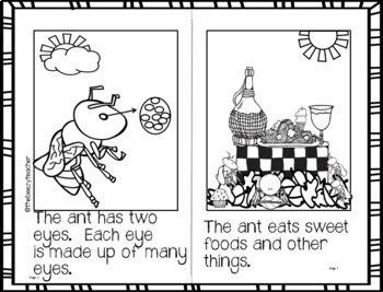 Ant Facts Booklet