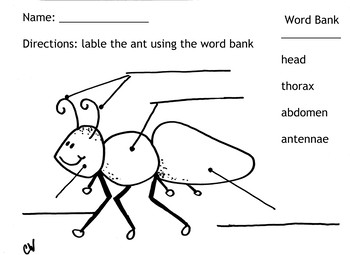 Ant Labeling Sheet