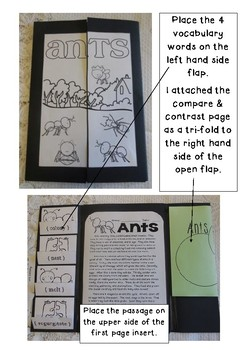Interactive Science Ant Lapbook