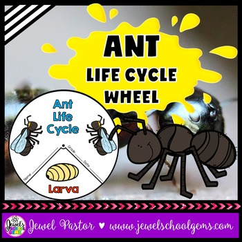 Animal Life Cycle Activities (Ant Life Cycle Craft)