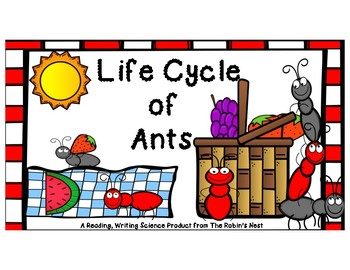 Ant Life Cycle