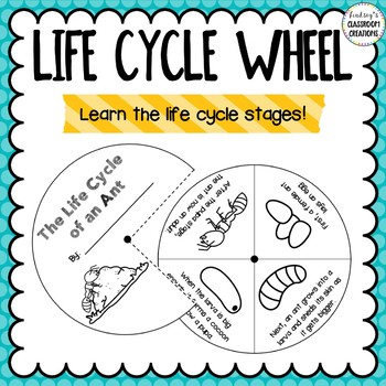 Ant Life Cycle Activities - Great For Centers, Seatwork, & More!