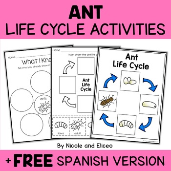 Ant Life Cycle Activity