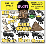 Ant Life Cycle Clip Art Bundle {Educlips Clipart}