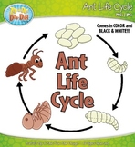Ant Life Cycle Clipart {Zip-A-Dee-Doo-Dah Designs}