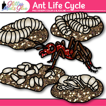 Ant Life Cycle Clip Art {Great for Animal Groups, Insect, & Bug Resources}