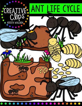 Ant Life Cycle {Creative Clips Digital Clipart}