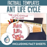 Ant Life Cycle Factball and Comprehension Sheet