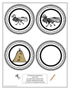 Ant Life Cycle Fold-Ems and Activity Resources