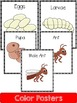 Ant  Life Cycle: Mini Unit