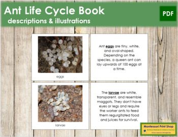 Ant Life Cycle Nomenclature Book