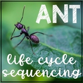 Ant Life Cycle Activity Sequencing & Writing Worksheets Differentiated