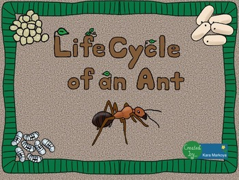 Ant Life Cycle Wheel and Teaching Cards