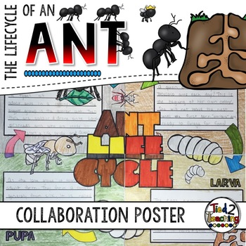 Ant Life Cycle Activity: Collaborative Research Poster