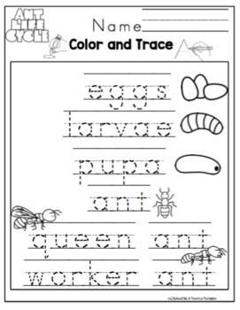 """Ant Lifecycle Printable """"No Prep"""""""