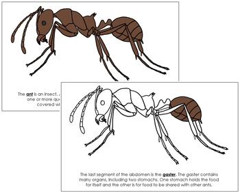 Ant Nomenclature Book