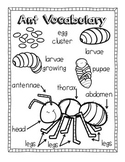 Ant Picture Vocabulary Pages