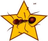 Ant Star #2