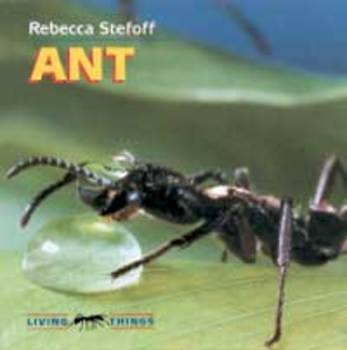 Ant Vocabulary