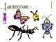 """""""Ant""""  Vocabulary PowerPoint"""