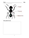 Ant Worksheet