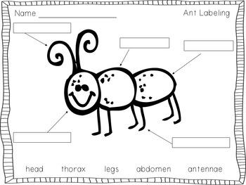 Ant-ivities: A Kindergarten Mini Unit on Ants