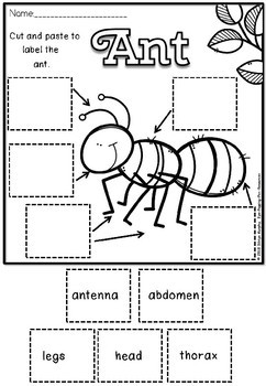 Ant labeling and writing(flash freebie)