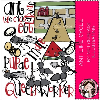 Melonheadz: Ant Life Cycle clip art - Combo Pack