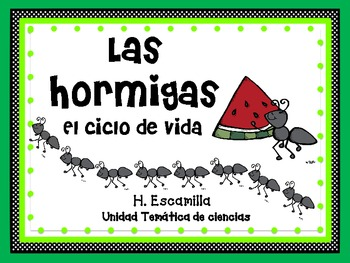 Ant life cycle in Spanish
