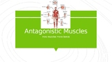 Antagnistic Muscles