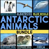 Antarctic Animals BUNDLE: Informational Article, QR Codes & Fact Sort