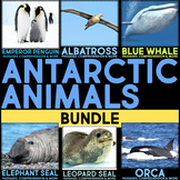 Antarctic Animals BUNDLE: Informational Article, QR Codes & Fact Sort