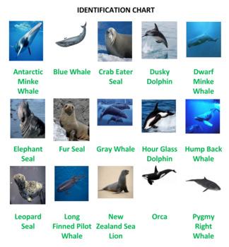 Antarctic Animals Jigsaw Puzzle