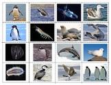Antarctic Animals:Mini Matching Cards