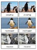 Antarctic Penguins Montessori 4-part cards --Penguins of Antarctica