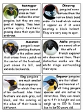 Antarctic Penguins Montessori 4-part cards --Penguins of A