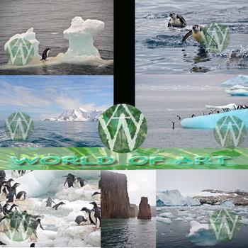Antarctica: 7th Continent - Animals, Landscapes, Glaciers, and Icebergs