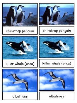 Antarctica--Animals of Antarctica--Safari LTD Antarctica Toob