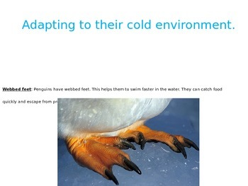 Antarctica Powerpoint