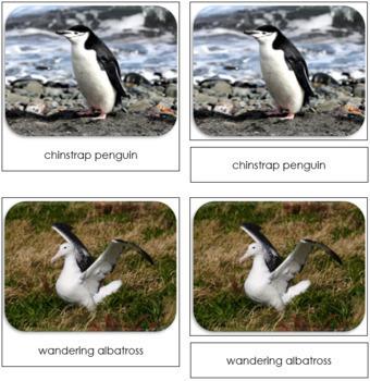 Antarctica Safari Toob Cards - Montessori