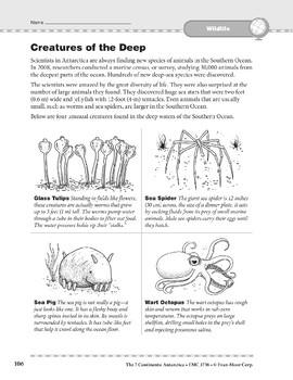 Antarctica: Wildlife: Creatures of the Deep