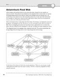 Antarctica: Wildlife: Food Web
